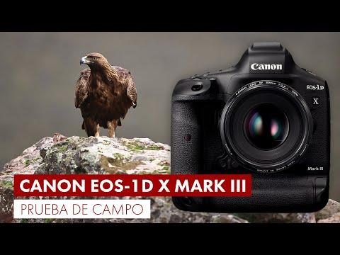 Probando la Canon EOS 1D X Mark III en la dehesa extremeña