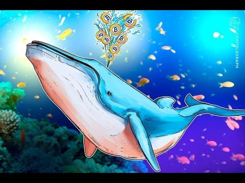Bitcoin Gold Is Held Captive by Whale With Almost Half the Supply