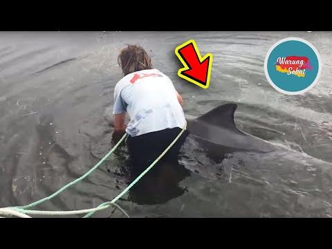 KASIAN !! ikan ini Tersangkut Rumput Laut, Beruntung ada Pria baik Hati