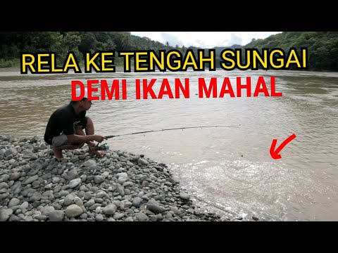 Lihat hasilnya ..!!! Tidak sia sia ketengah sungai berburuh ikan mahal