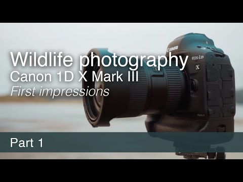 Wildlife Photography and the Canon EOS-1D X Mark III | First Impressions