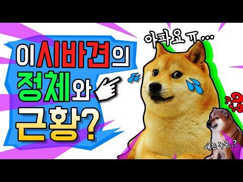 이 시바견의 정체와 슬픈 근황…(시바견 밈, 시바견 짤, doge)
