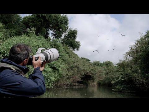 Shot on Canon EOS R6 with Wildlife Photographer Canon EOS Maestro Sachin Rai