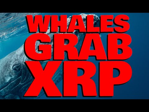 XRP: Data Shows WHALES BUY XRP As Public Sentiment INCREASES | XRP Price History REPEATING