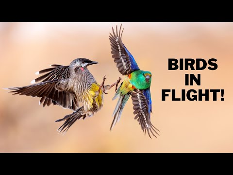 Birds in Flight Photography! EOS R5 in the Outback