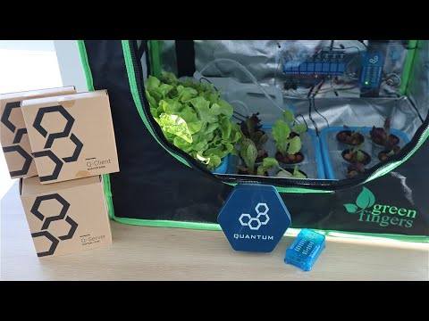 Automated IoT Indoor Hydroponic Farm Using Quantum Integration